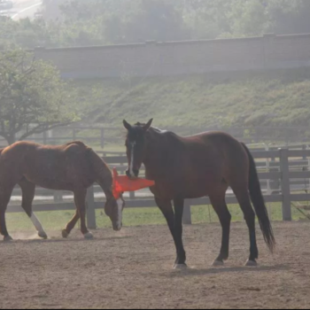 Carmel and Big playing in the arena